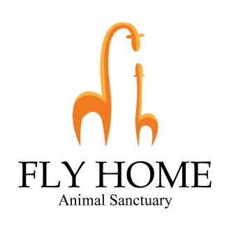 flyhome